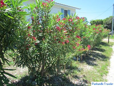 Travel Tips For Florida Panhandle Poisonous Plants