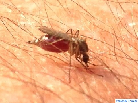 Florida Panhandle Bugs and how to deal with them  Tips for