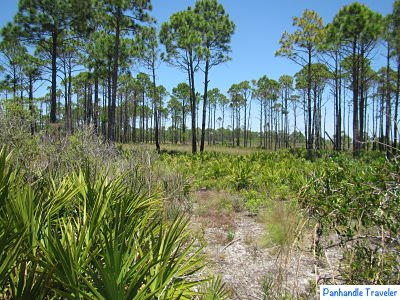 Click On The Following Link For More Basic Information About Visiting Florida Panhandle 411